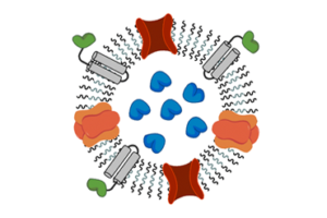 Arbeitsgruppe Nanobiotechnologie